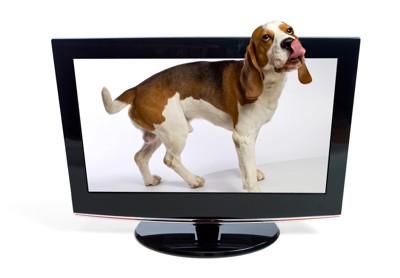 テレビの中に入った犬
