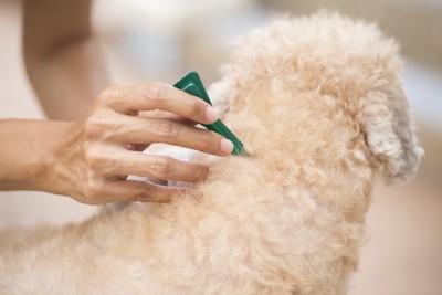 スポットタイプの薬を塗布される犬