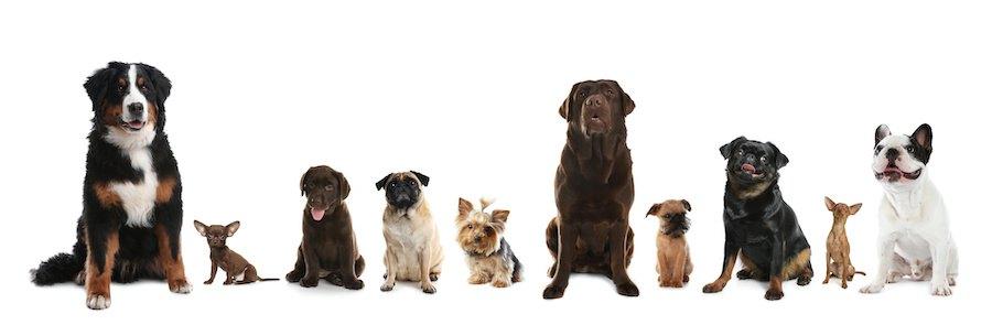 一列に並んで座っているいろいろな種類の犬たち