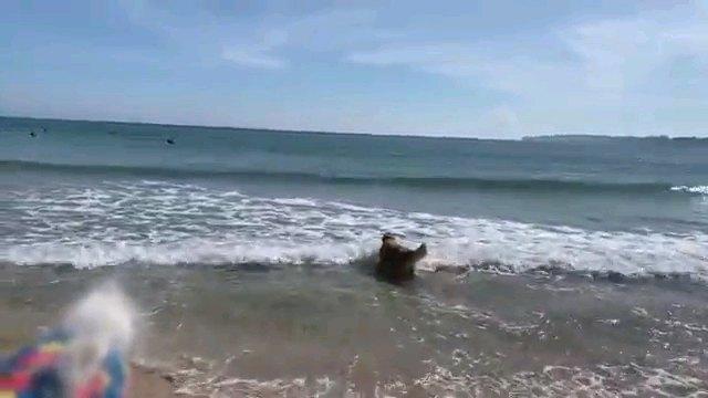 海へ歩く犬の後ろ姿