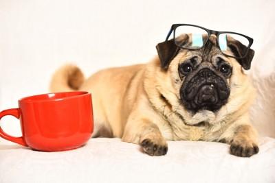 マグカップと犬