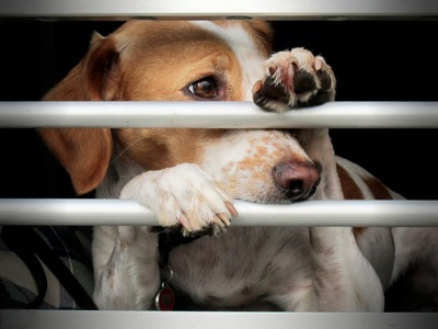 檻に手をかけている犬