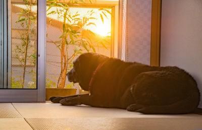 ポチ 窓際の黒い犬