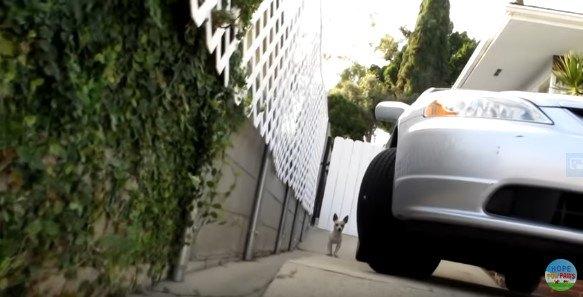 車の横に立つ犬