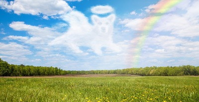 天国の手前に虹の橋と呼ばれる場所があり、亡くなったペットたちはそこで暮らしている。 一番元気だった頃の姿でみな仲良く幸せに暮らしているけれど、大切な人が