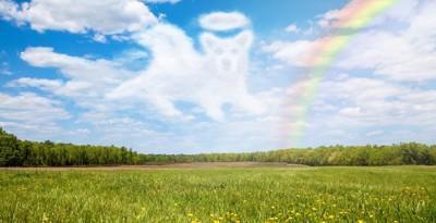 虹の橋の犬