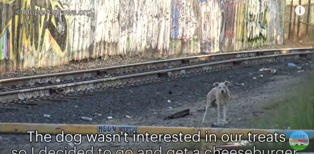人を眺める犬