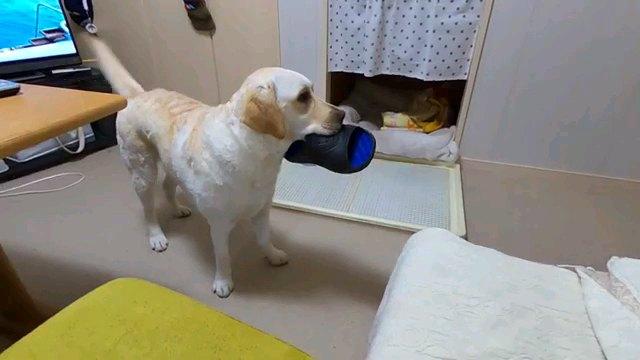 サンダル咥える犬