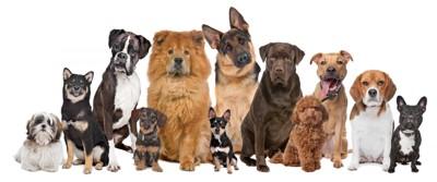 犬のお座り大集合