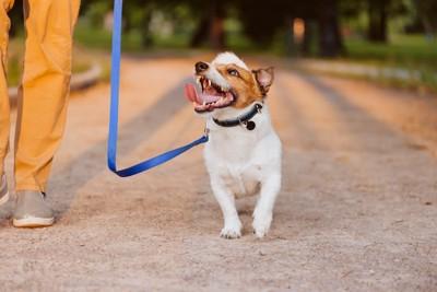 嬉しそうに散歩する犬