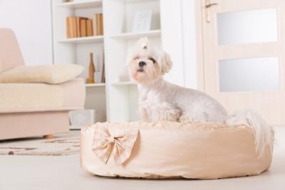 犬用ベッドにいるシーズー