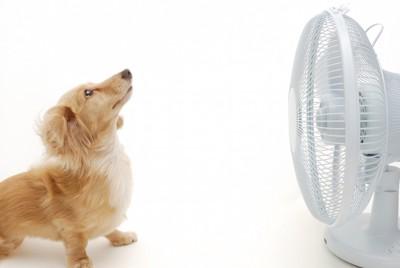 扇風機の前に座る犬