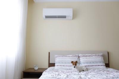 ベッドの上にいる犬