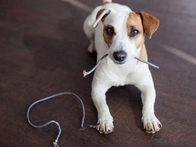 ケーブルをかみちぎる犬