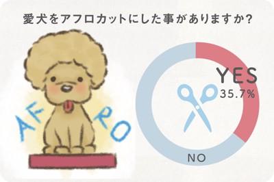 アンケート結果「愛犬をアフロカットにした事がありますか?」