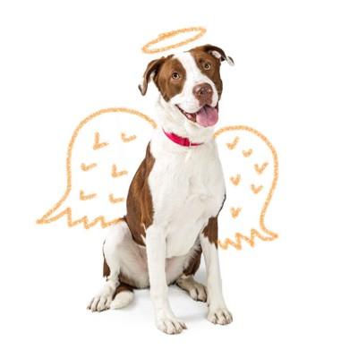 天使の輪と翼を書き加えた犬