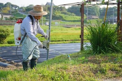 草に除草剤を撒くおじいさん