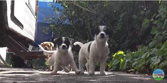 カメラから距離を取る子犬