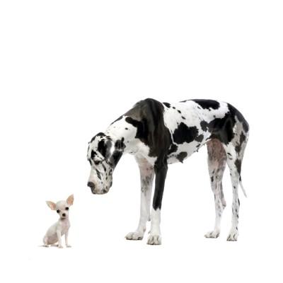 大きい犬と小さい犬