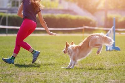 芝生でトレーニングする犬