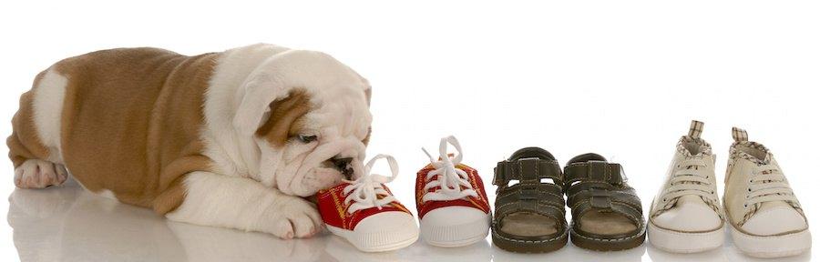 並んだ人の靴と齧る犬