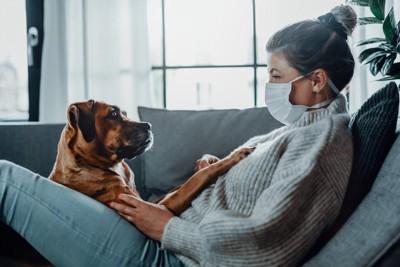 マスクをしている女性と向き合う犬