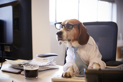 パソコンを使って仕事をしている眼鏡をかけた犬