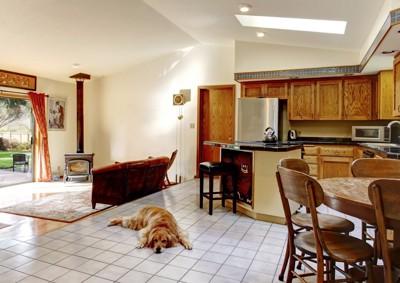 家でリラックスする犬