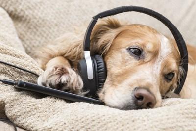 音を聴く犬