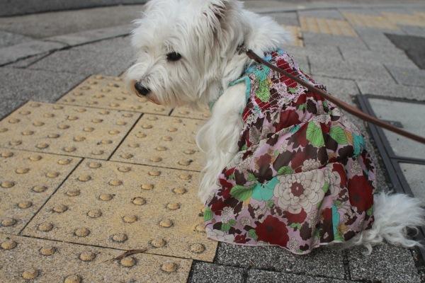 しょんぼり犬