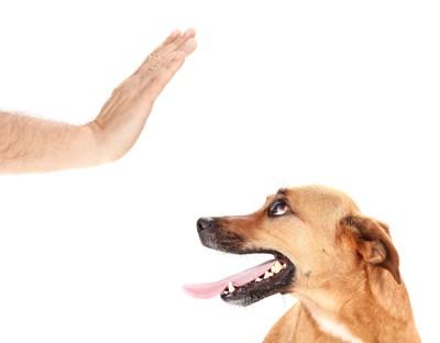 飼い主に手で制止されている犬