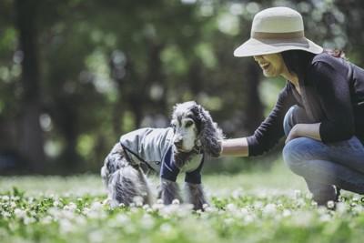 お散歩を楽しむ老犬のコッカーと女性