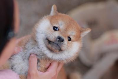 向かい合って抱えられている子犬