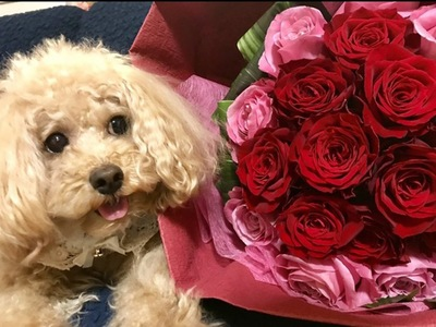 プロポーズのお花ともか