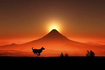 富士山の日の出と走る犬のシルエット