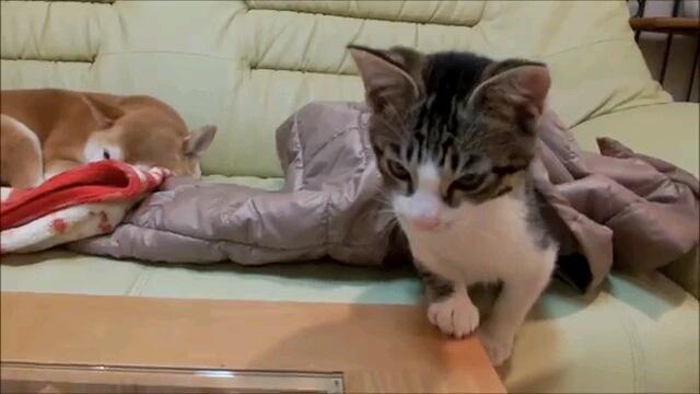 起きる子猫