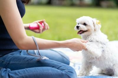 飼い主の指示でお手をする犬