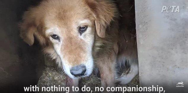 小屋で物憂げな犬