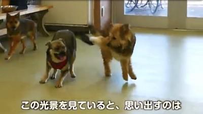 3匹の犬が走ってる