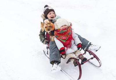 ソリに乗る二人の子供とヨーキー