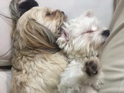 寄添い眠る犬達