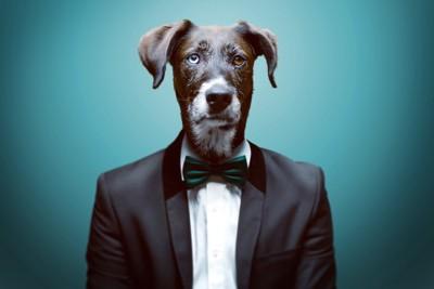 タキシードを着た犬