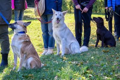 グループトレーニングに参加する犬と飼い主たち
