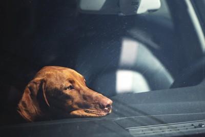 車の中に残された悲しげな犬