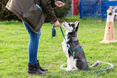 座って飼い主の指示をじっと聞く子犬