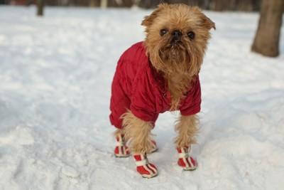靴を履いた犬と雪