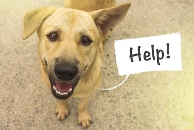 訴えるように見つめる犬とHELPの文字