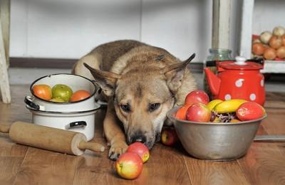 調理器具と食材に囲まれた犬