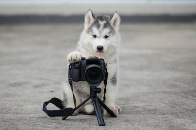 カメラを構える子犬