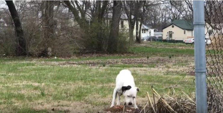 地面から食べる犬
